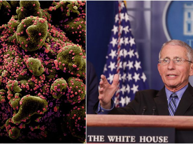 'Covid-19 could be seasonal': Fauci warns coronavirus is likely to return in 'CYCLES', stresses need for vaccine