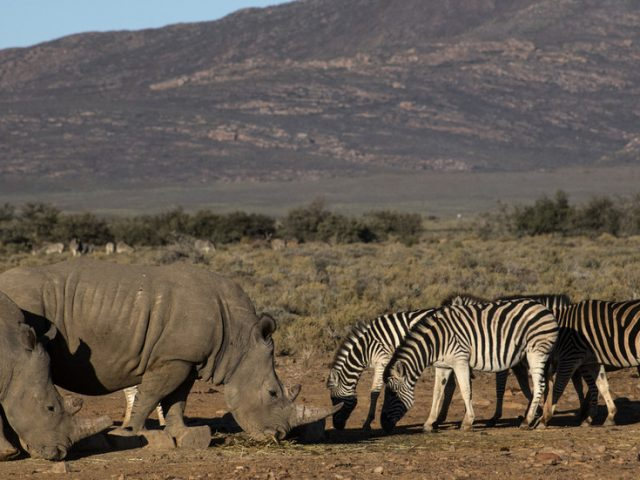 Covid-19 crisis puts South African RHINOS & other wild animals in danger as tourism industry goes off a cliff
