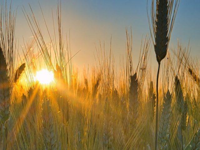 World's top grain exporter Russia keeps global supplies high despite Covid-19 pandemic