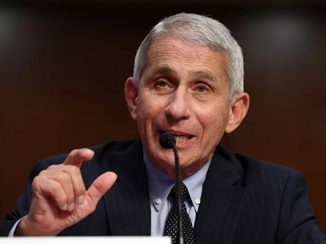 Fauci Says US 'Needs to Keep Eye' on New Swine Flu in China to Avoid COVID-19 Pandemic Scenario