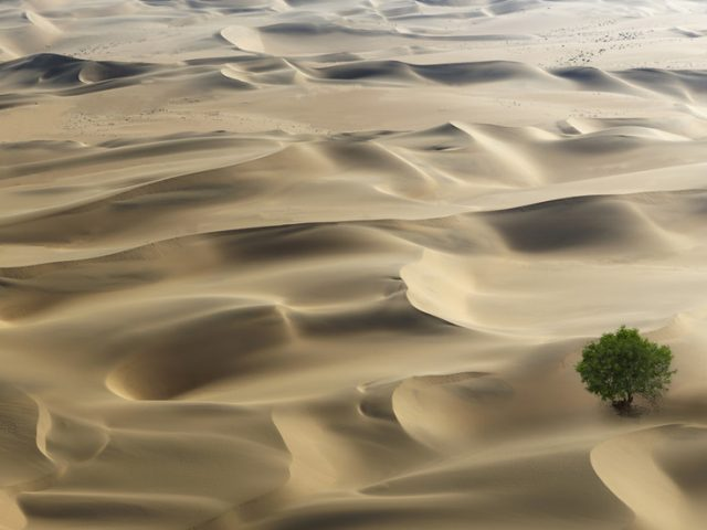 New satellite survey reveals Africa's deserts actually filled with BILLIONS of trees