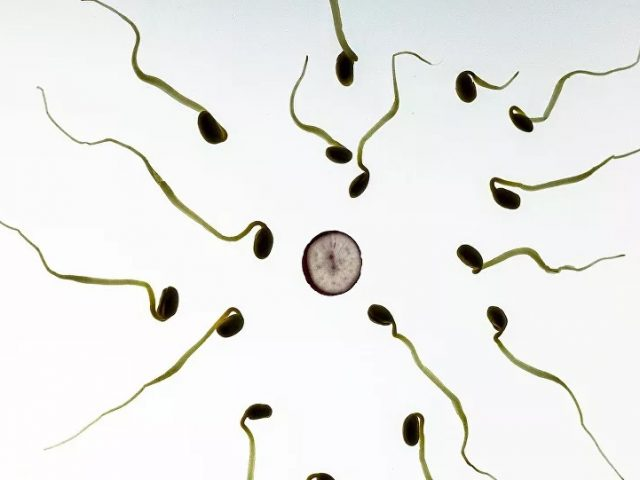 Moderate to Severe COVID-19 Infections May Reduce Fertility in Men – Study