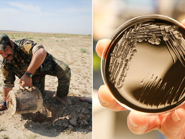 Militarized microbes? Pentagon's DARPA seeks means to spread genetically modified bacteria as 'explosives sensors'