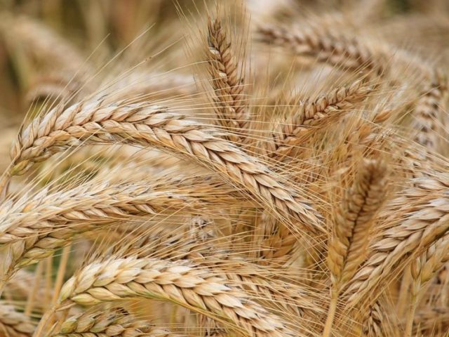 Russia has become world's NUMBER 1 exporter of wheat & other agriculture – Putin