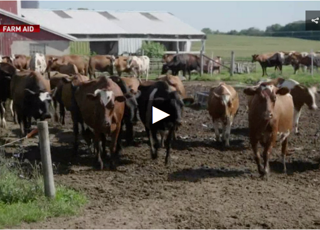 America's farms: Heartbreak in the heartland