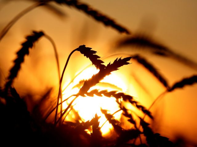 Russia could suspend grain exports next month if export quota is reached