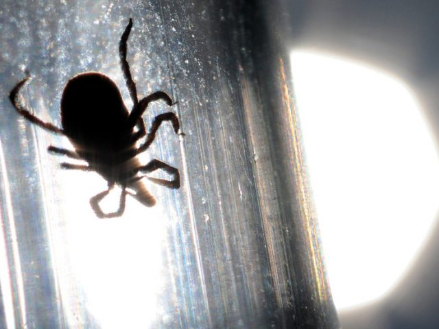 Doctors sound alarm as deadly tick-borne virus re-emerges in China, kills 7 so far