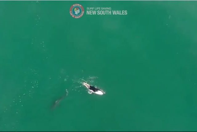 WATCH: Drone deployed to warn championship surfer of impending SHARK ATTACK