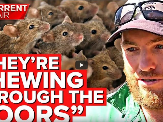 Horrific mouse plague taking over farms and homes   A Current Affair