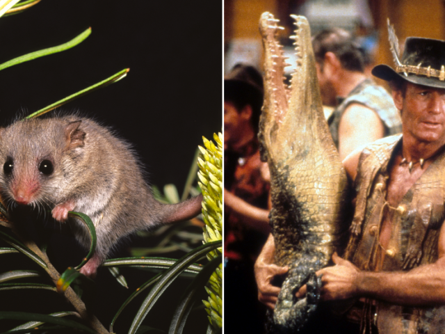 Where's the Aussie spirit? 'Pygmy possum' leaders impose one punishing lockdown after another despite a single death in 6 months