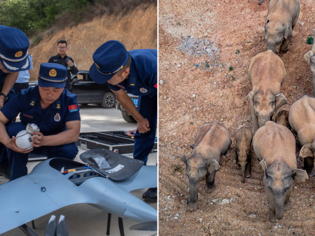 Drones, 100s of people & vehicles sent to block UNSTOPPABLE herd of 15 elephants trampling Chinese towns & farmlands (VIDEOS)
