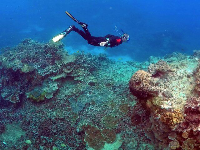 Great Barrier Reef avoids UNESCO endangered list after lobbying efforts from Australia and 11 other countries