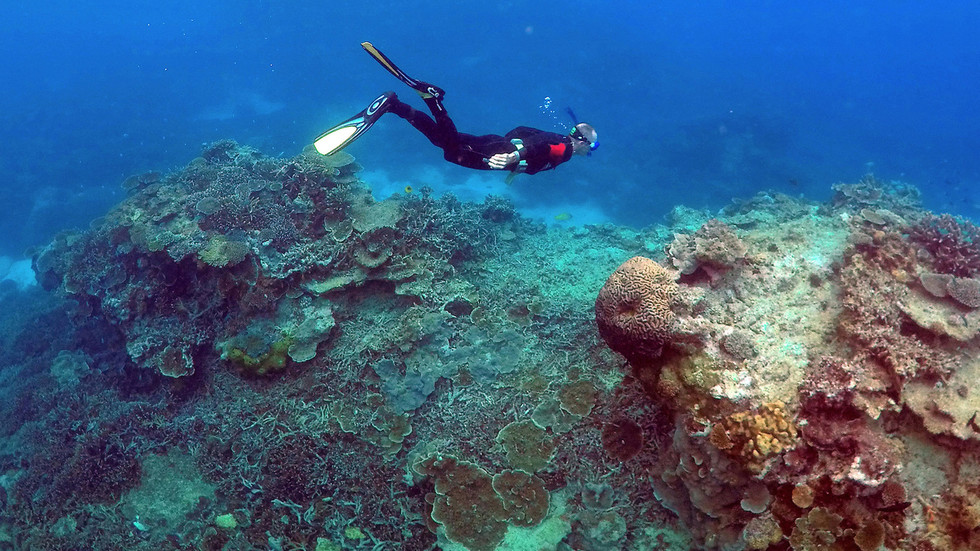 Great Barrier Reef will