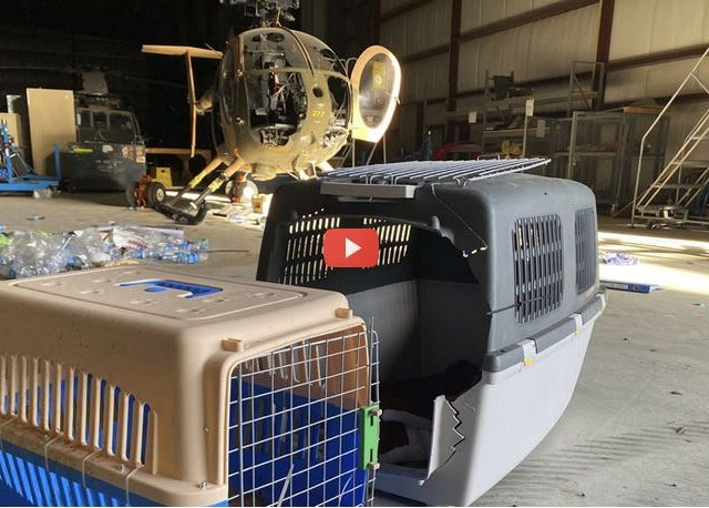 WATCH: Abandoned US-made hardware, empty service-dog crates filmed CLOSE-UP in RT tour of Afghanistan's Kabul airport