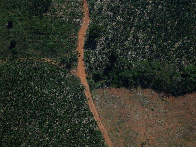 Environmental activists take Brazilian president Bolsonaro to ICC over 'crimes against humanity' for destruction of Amazon