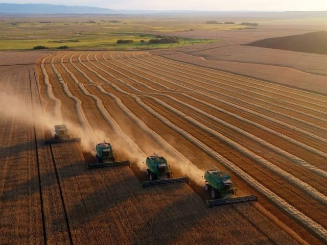 Russia to hike grain export duty to support domestic producers